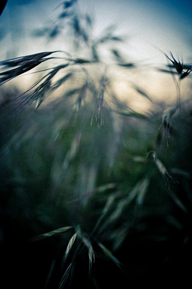 Fotografía artística - 01