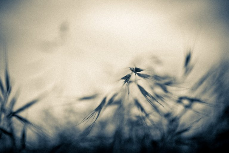 Fotografía artística - 02