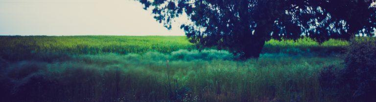 Fotografía artística - 08